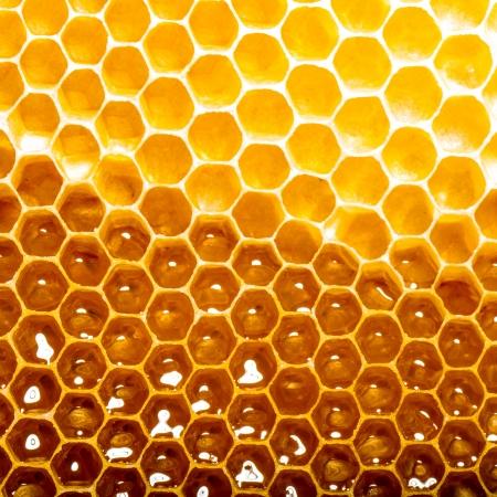 abejas panal: miel fresca en el panal