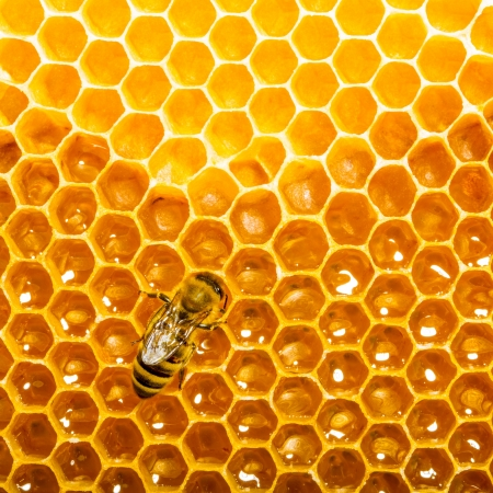 Top view of the working bees on honeycells. Stock Photo - 14086979