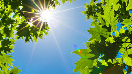 sun lit: Green Leaves and sun with beautiful lens flare against the Sky