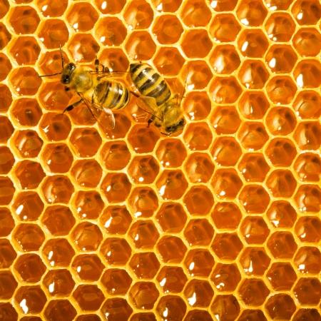 las abejas trabajan en los panales Foto de archivo - 14092744