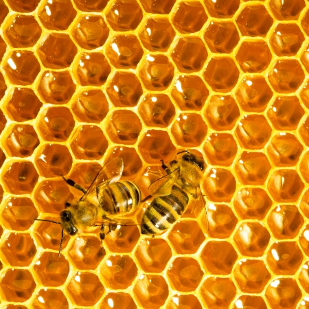 bees work on honeycombs photo