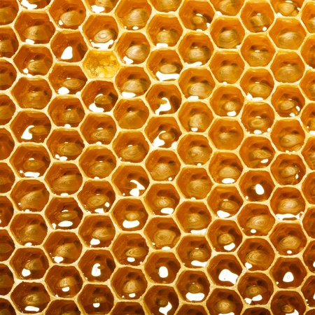 fresh honey in comb Stock Photo - 14163812