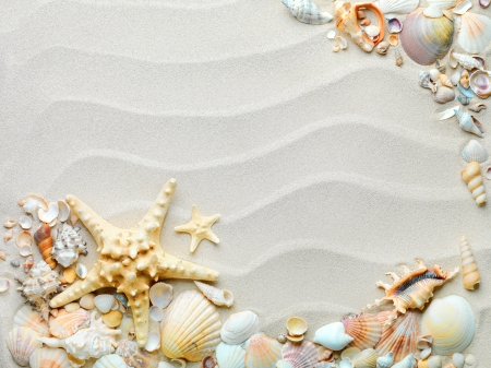 beach sand with shells and starfish