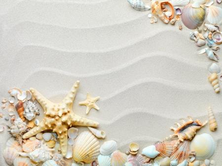 estrella de mar: playa de arena con conchas y estrellas de mar