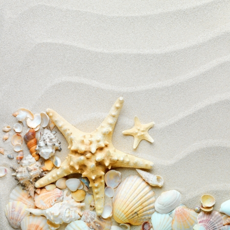 starfish beach: beach sand with shells and starfish