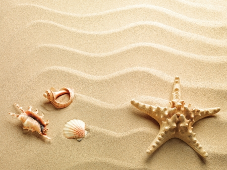 starfish with sea sand as background photo