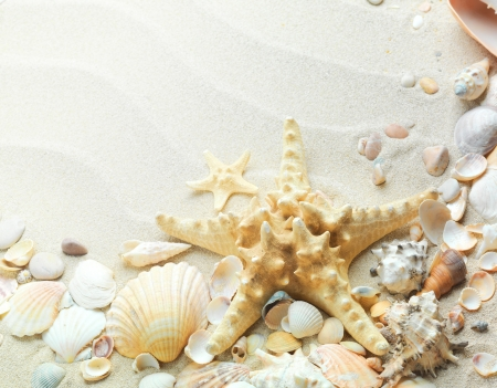 beach sand with shells and starfish photo