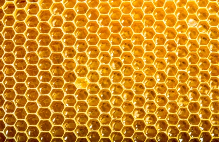 ready honeycomb with sweet honey photo