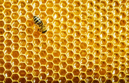 bees work on honeycomb Stock Photo - 17468185