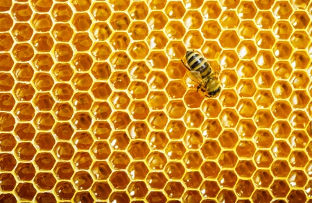 beehive: bees work on honeycomb Stock Photo