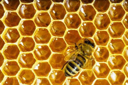 bees work on honeycomb with sweet honey photo