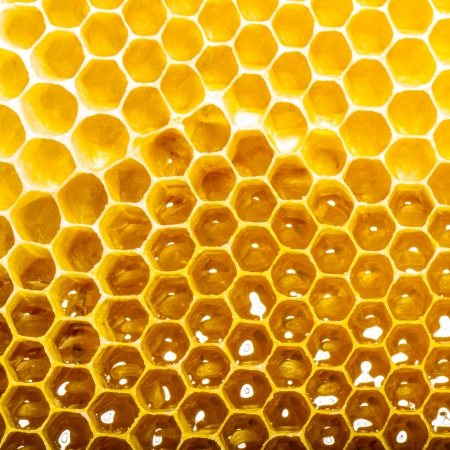 unfinished honey making in honeycombs photo