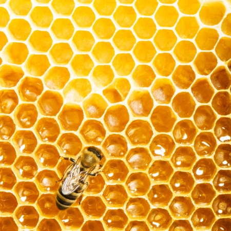 bees work on honeycomb photo