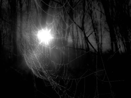 Spider web early  in the morning  photo