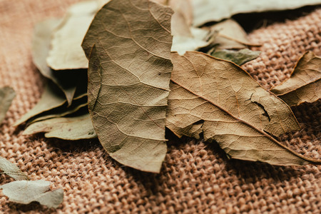 few laurel leaves on light fabric sacking. Stock Photo