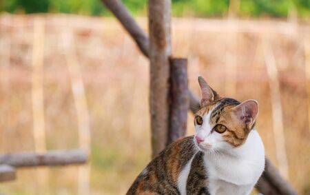 Cute brown and white cat on blurred background