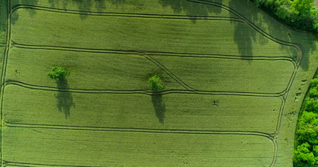 a tree in a field in aerial view