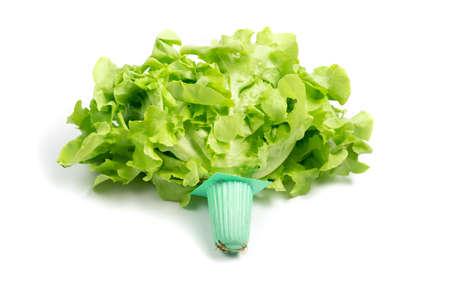 Lettuce organic vegetable. isolated on white background