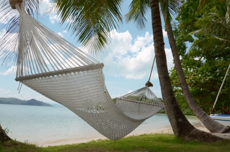 hummock: view of nice hammock hanging between two coconut trees