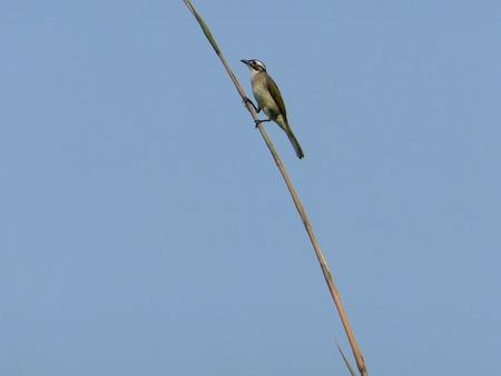 shoots: Bamboo shoots birds Stock Photo