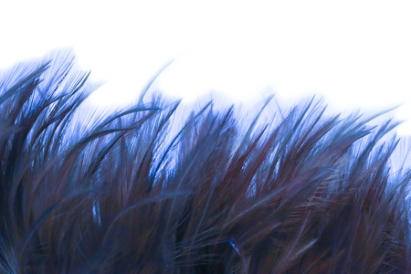 blue fluffy feathers on background - soft focus