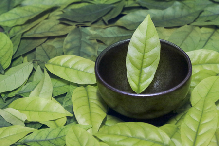 Image of eastern teacups on leaves