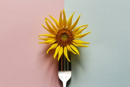 Creative of sunflower with stainless steel fork on pastel pink and blue background. Minimal idea summer concept.