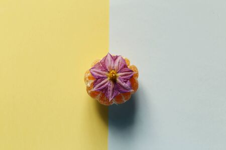 Creativity of purple flower with orange on pastel pink and blue background. minimal idea food and fruit concept.  top view Stock fotó