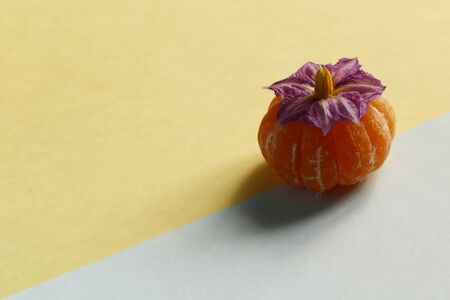Close up purple flower with orange on pastel pink and blue background. Minimal idea summer concept. Stock fotó