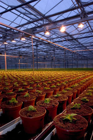 Large greenhouses with young plants