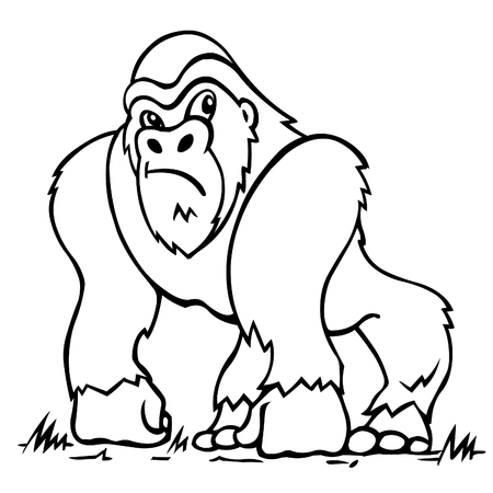 primates: Gorilla. Vector illustration