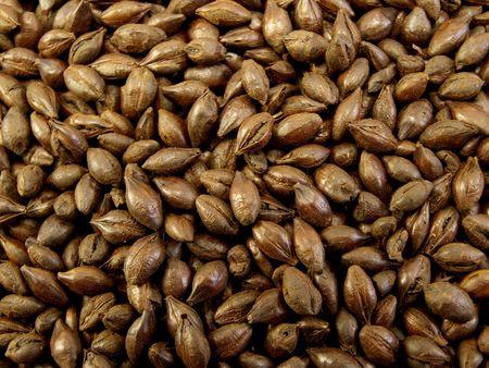 extra large: An Extra Large Bag of Roasted Barley