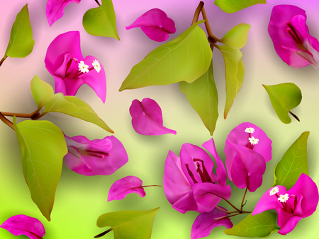 stamen: Summer or spring background with purple tropical flowers, fallen petals and leaves on a black and white striped background. Realistic plants. Bougainvillea. Vector illustration Illustration