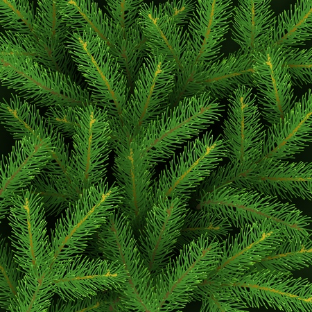 Christmas background with realistic branches of Christmas tree Festive backdrop Vector illustration