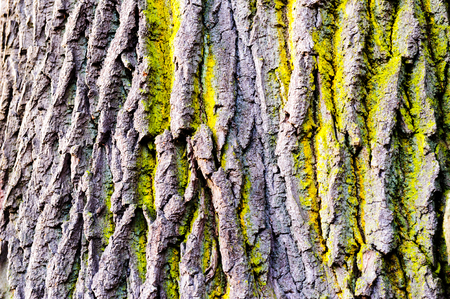 corroded: Tree bark texture with detail of moss and lichen on wooden fence Stock Photo