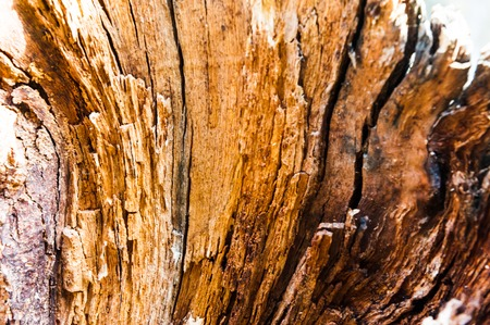 old split with an ax tree with irregular structure. Firewood, photographed close-up. Small depth of field. on wood visible traces of decomposition and destruction of insects Stock Photo