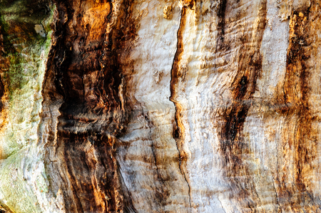 wood stain: Wood texture background Close-up of old dead wood that is stained and pitted with a rough textured surface.