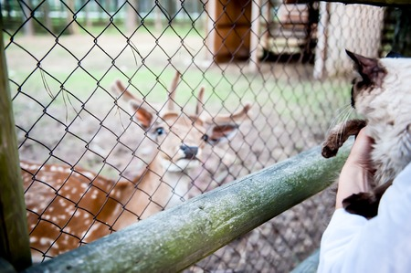 girl feed a deer and keep a furry cat on their hands. The concept of love for animals and pets