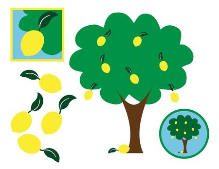 citrus tree: Lim�n y elementos de dise�o del �rbol de lim�n Vectores