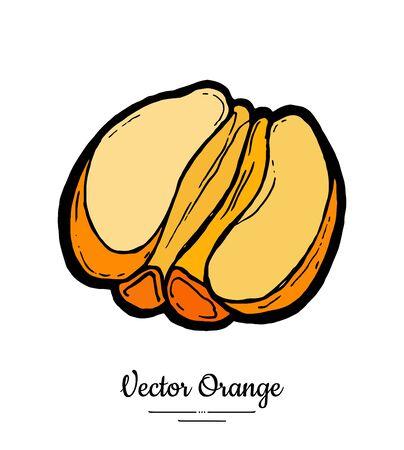 Orange vector isolated. Half cut peeled orange, mandarin tangerine. Fruit hand drawn. Sweet citrus food vegetarian