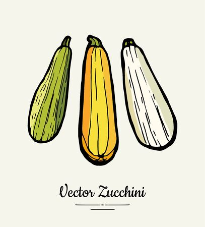 Zucchini hand drawn illustration. Hipster illustration of striped squash. Isolated green zucchini for vegetarian poster, cooking school, restaurant menu,  icon, food shop, harvest festival.