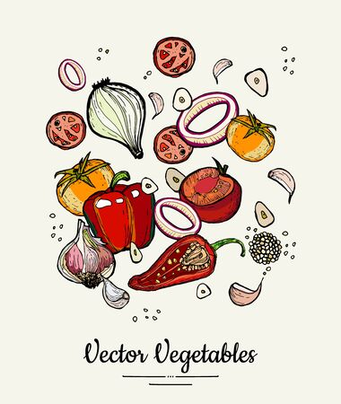 Vegetable isolated hand drawn illustration. Vector hipster hand drawn colored vegetables for vegetarian poster, cooking school, restaurant menu, food article, website, cooking book, shop, festival. 版權商用圖片 - 149503216