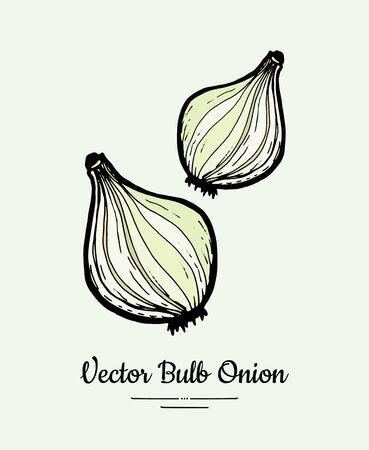 White green bulb onion hand drawn vector illustration. Modern line ink vegetable onion halves illustration.
