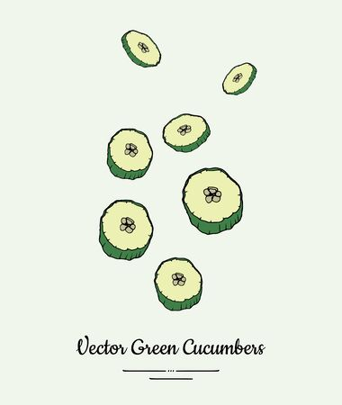 Cucumber vegetable vector isolate. Green chopped cucumber sliced rings. Vegetables hand drawn illustration. Ilustração Vetorial
