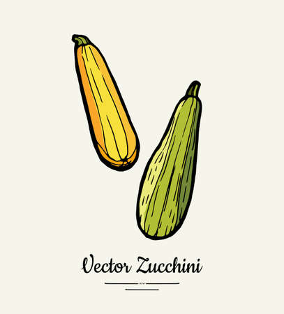 Zucchini hand drawn illustration set. Hipster illustration of squash. Isolated green zucchini for vegetarian poster, cooking school, restaurant menu, banner, logo, icon, food shop, harvest