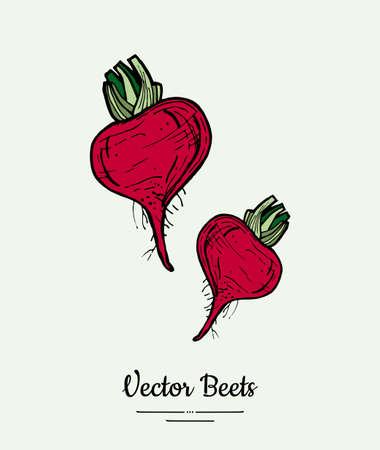Beet vegetable vector isolate. Red whole beetroot green leaves. Vegetables hand drawn illustration. Food vegetarian sweet purple beetroot icon logo poster, banner, sketch. Vector illustration isolated