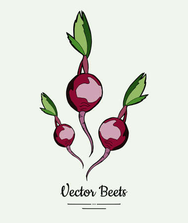 Beet vegetable vector isolate. Red whole beetroot green leaves. Vegetables hand drawn illustration. Food vegetarian sweet purple beetroot icon logo poster, banner, sketch. Vector illustration isolated