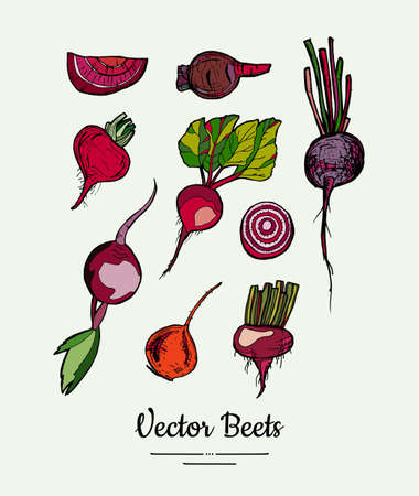 Beet vegetable vector set isolate. Red whole sliced cutted beetroots green leaves. Vegetables hand drawn illustration. Food vegetarian sweet purple beetroot icon logo poster banner sketch illustration