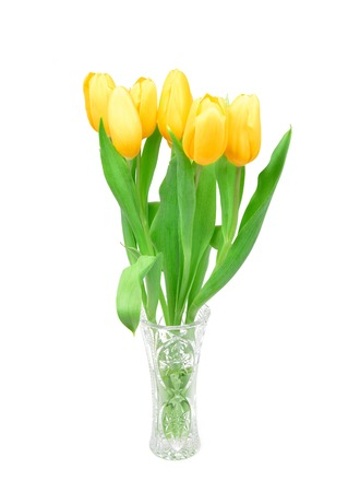 tulips isolated on white background: Yellow tulips in a glass vase isolated on white background, spring Flowers.