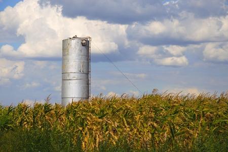 municipal utilities: Water tower in a cornfield.